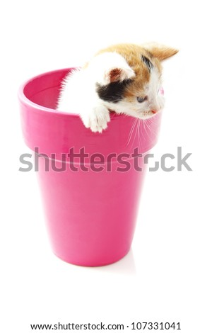 Kitten in a pink  jar isolated over white