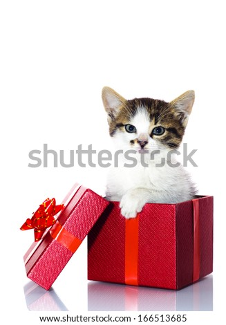 Kitten in a present box
