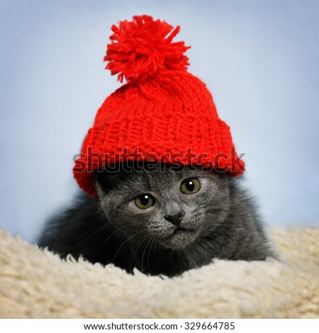 kitten in a red hat - stock photo