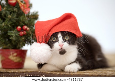 kitten in a santa hat and christmas tree