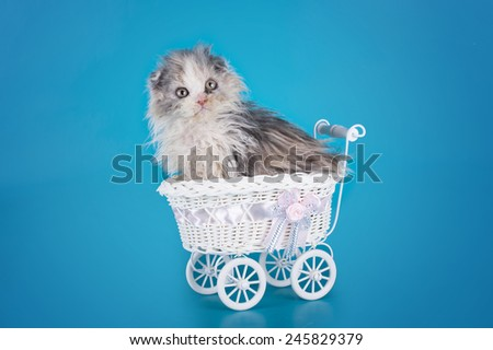 kitten in a stroller on a blue background isolated - stock photo