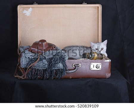 kitten in a vintage suitcase