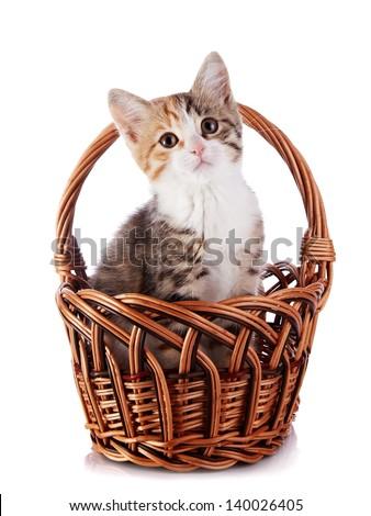 Kitten in a wattled basket. Multi-colored small kitten. Kitten on a white background. Small predator. Small cat. - stock photo
