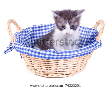 Kitten in a wicker basket - stock photo