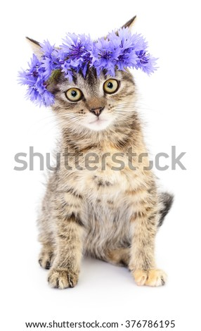 Kitten in a wreath on a white background - stock photo