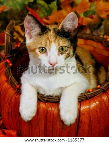 Kitten in autumn basket