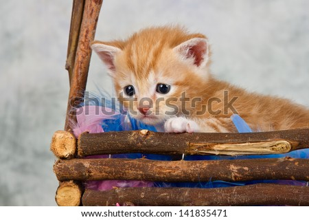 Kitten in basket brown wood small cute afraid - stock photo