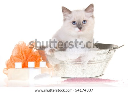 Kitten in bath tub with soap, on white background - stock photo