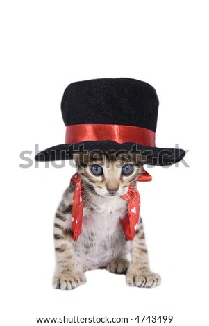 Kitten in black top hat and red vest with bow tie isolated on white