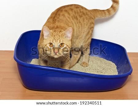 kitten in blue plastic litter cat - isolated on white background  - stock photo