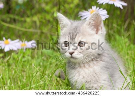Kitten in flowers - stock photo