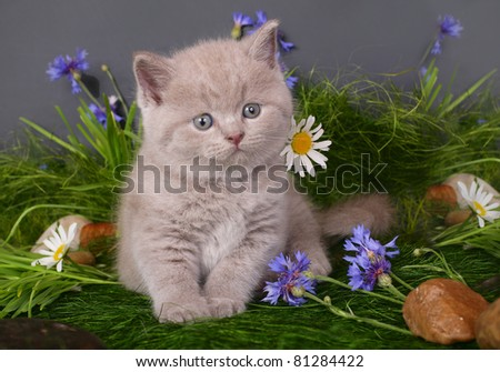 Kitten in flowers on a black background - stock photo