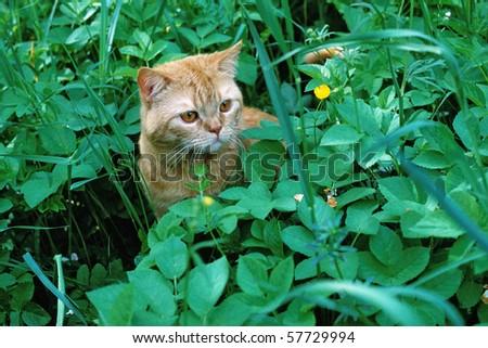 kitten in grass - stock photo