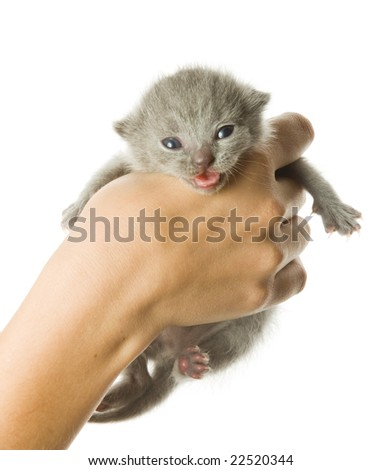 Kitten in hand. Isolated on white background