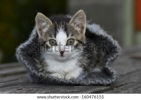 Kitten in hideout � knitted hat - stock photo