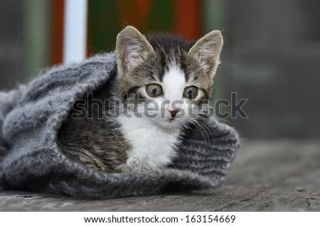 Kitten in knitted hat - stock photo