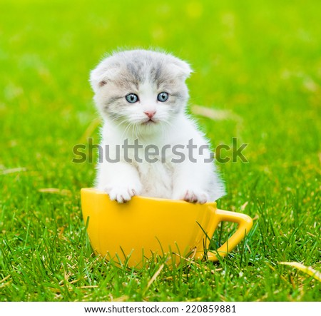 kitten in large cup on green grass - stock photo