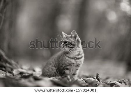 kitten in  leaves - stock photo