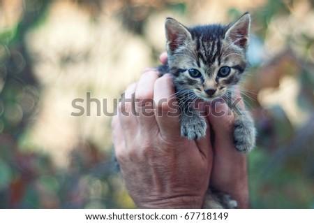 Kitten in man's hands - stock photo