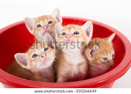 kitten in red plastic basin. - stock photo