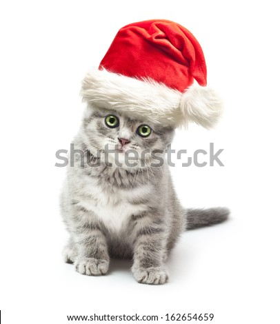 Kitten in Santa Claus xmas red hat on white background. - stock photo
