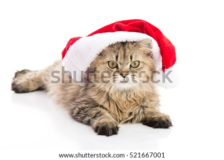 Kitten in Santa Claus xmas red hat on white background,isolated