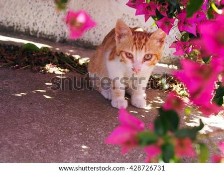 Kitten in the flower street  - stock photo