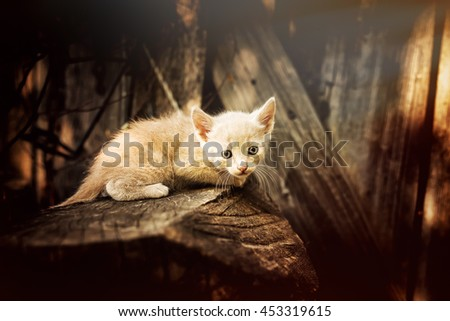 Kitten in the woods looking scared. - stock photo