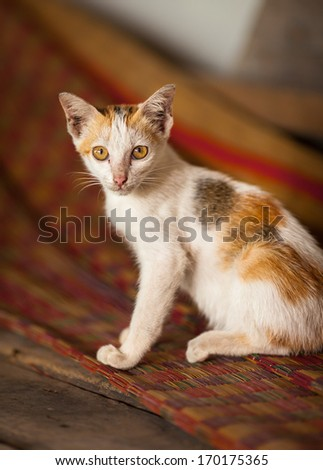 Kitten in traditional Vietnamese house at Mekong Delta in South Vietnam