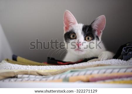 Kitten in Wardrobe - stock photo