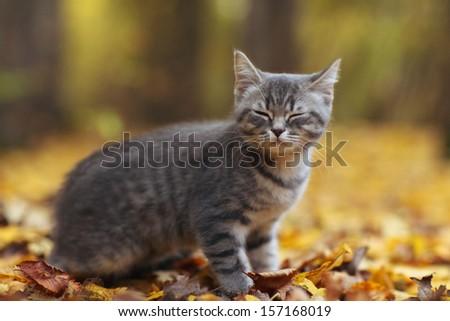 kitten in yellow leaves - stock photo