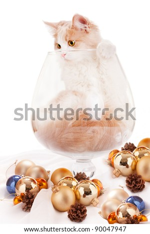 Kitten inside large cognac glass - stock photo