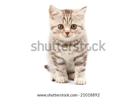 Kitten isolated