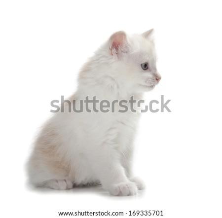 kitten isolated over white background - stock photo