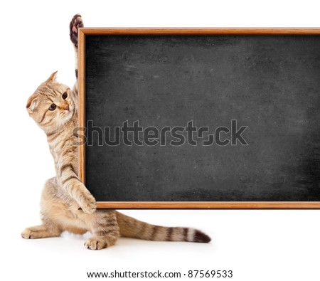 kitten isolated with blackboard for your text - stock photo