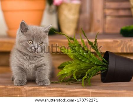 kitten knocked over flower pot - stock photo