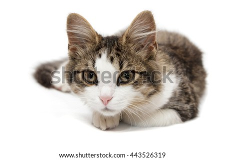 kitten lies on a white background and looks in camera - stock photo