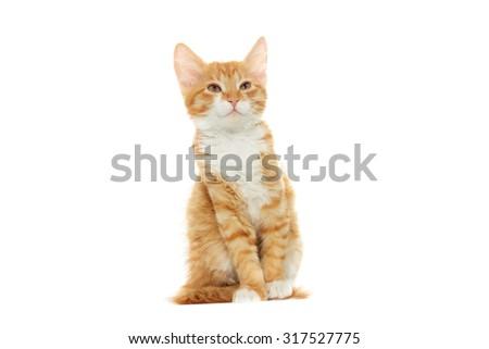 kitten looking - stock photo