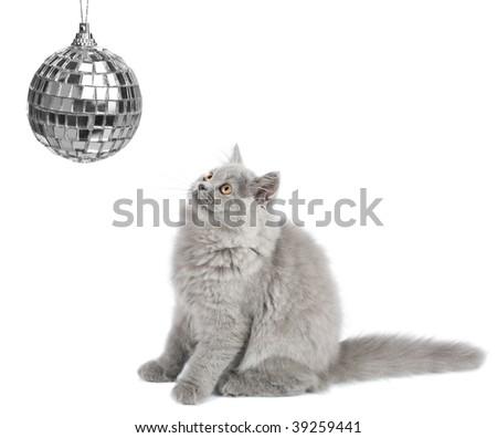 kitten looking at christmas ball isolated - stock photo