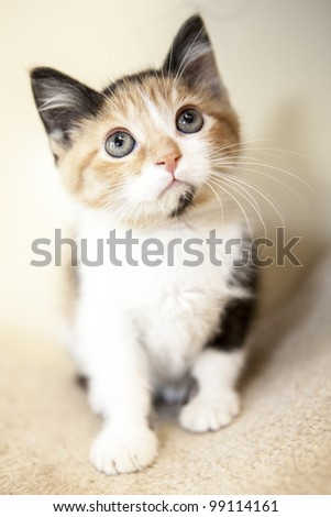 Kitten looking away from the camera - stock photo