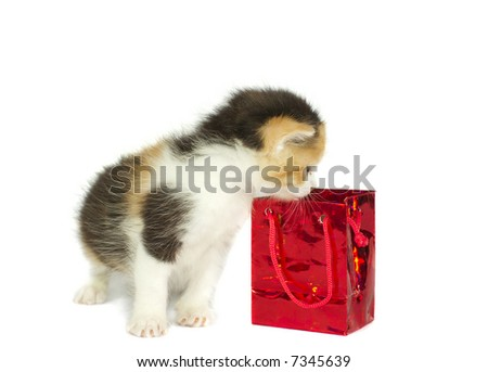 kitten looking into gift box isolated on white - stock photo