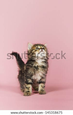 Kitten looking up against pink background - stock photo