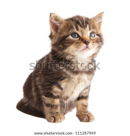 Kitten looking up on white background