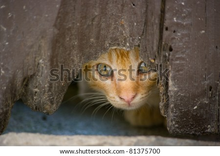 Kitten looks hidden across the hole of an old door - stock photo