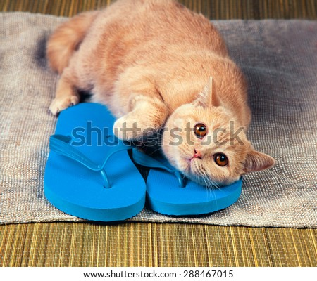 Kitten lying on flip flops sandals - stock photo