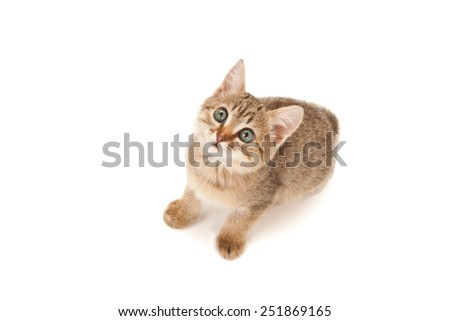Kitten lying on the floor and looking up isolated on white - stock photo