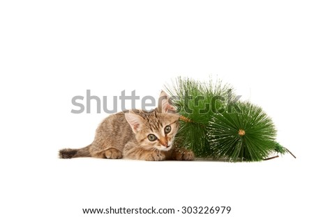 Kitten lying on the floor and playing isolated on white - stock photo