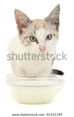 Kitten milk, on white background. - stock photo