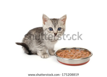 Kitten near a bowl with food isolated on white background - stock photo