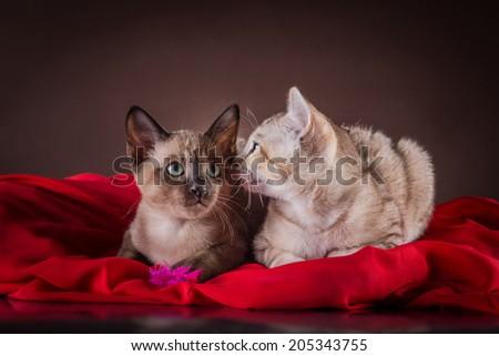 kitten on a dark background - stock photo